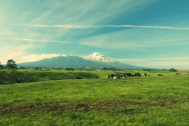 An image of a milk farm in New Zealand