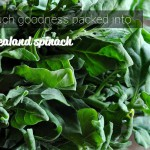 new zealand spinach goodness